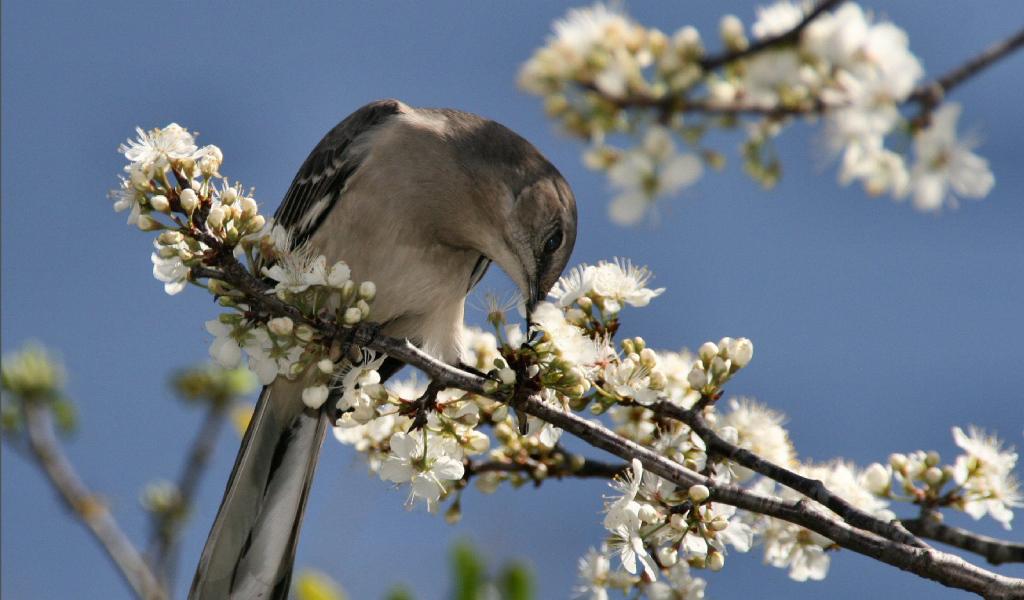 Скачать обои и фото Птичка на ветке с цветами в разрешении 1400x1050 пиксел