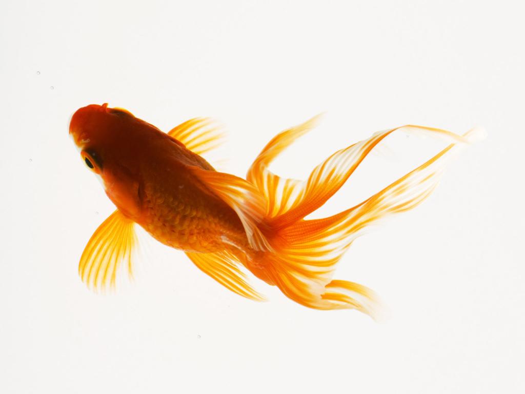Список картинок Рыбы фото.