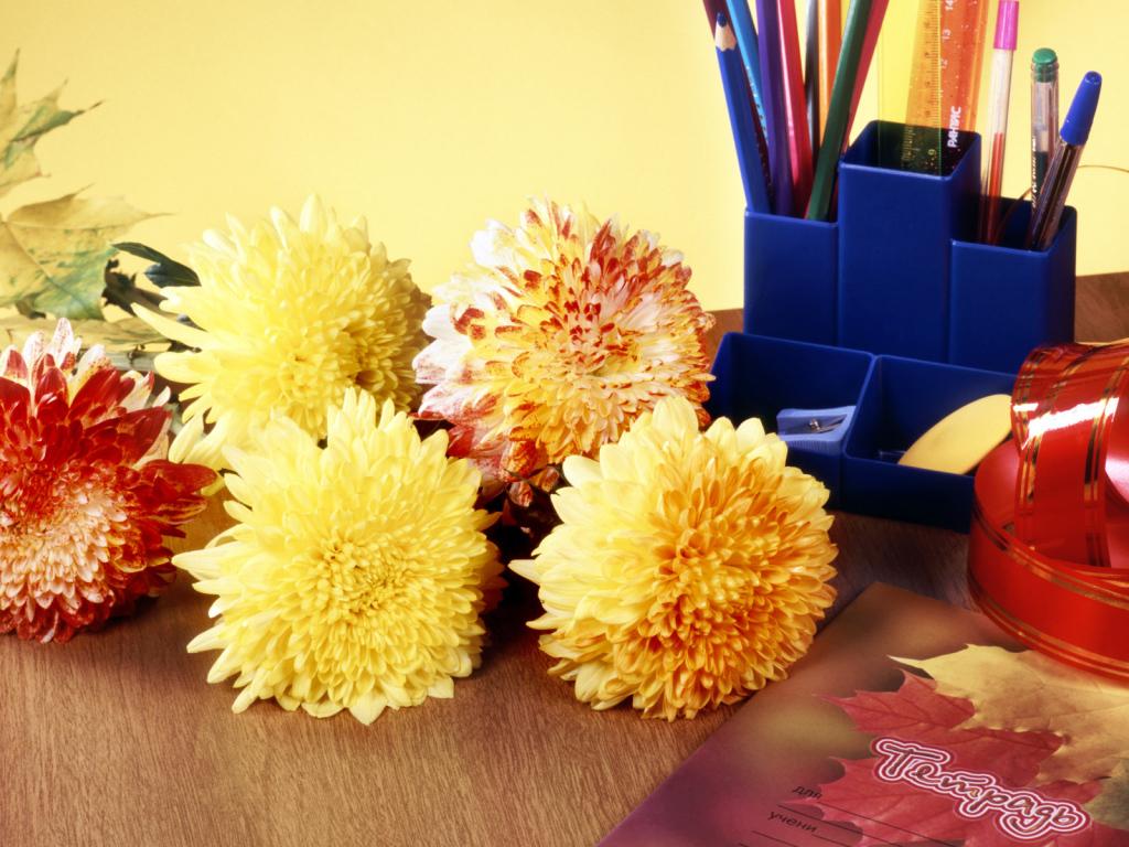 Цветы учителю картинки 8