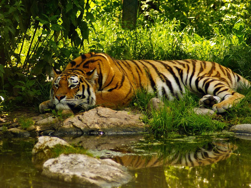 Тигр в цветах картинки 8