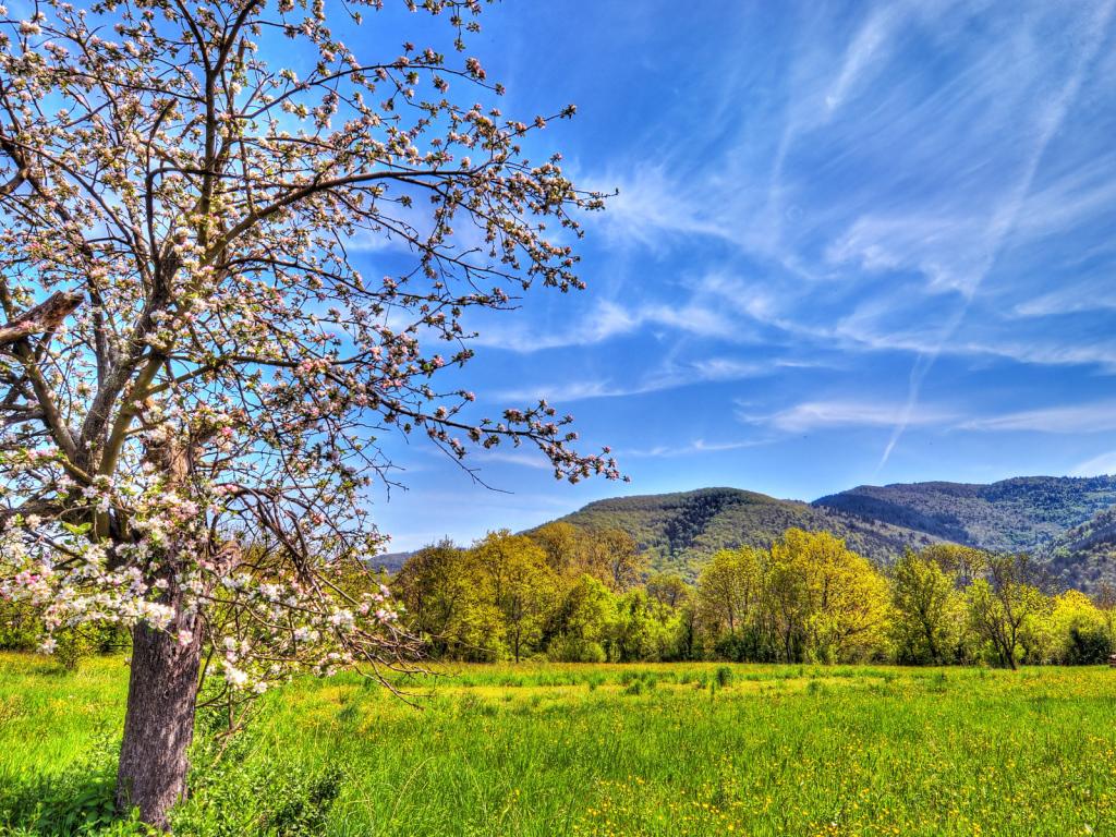Spring landscape Desktop wallpapers 1024x768