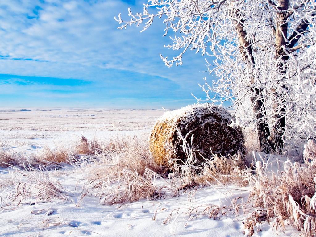 Поле зимой фото 8