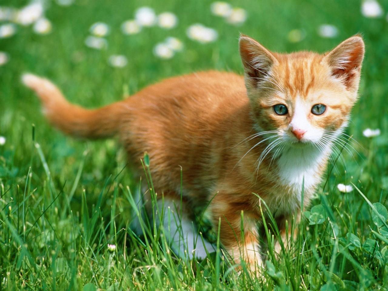 http://www.zastavki.com/pictures/1280x1024/2007/Animals_Cats__004296_.jpg