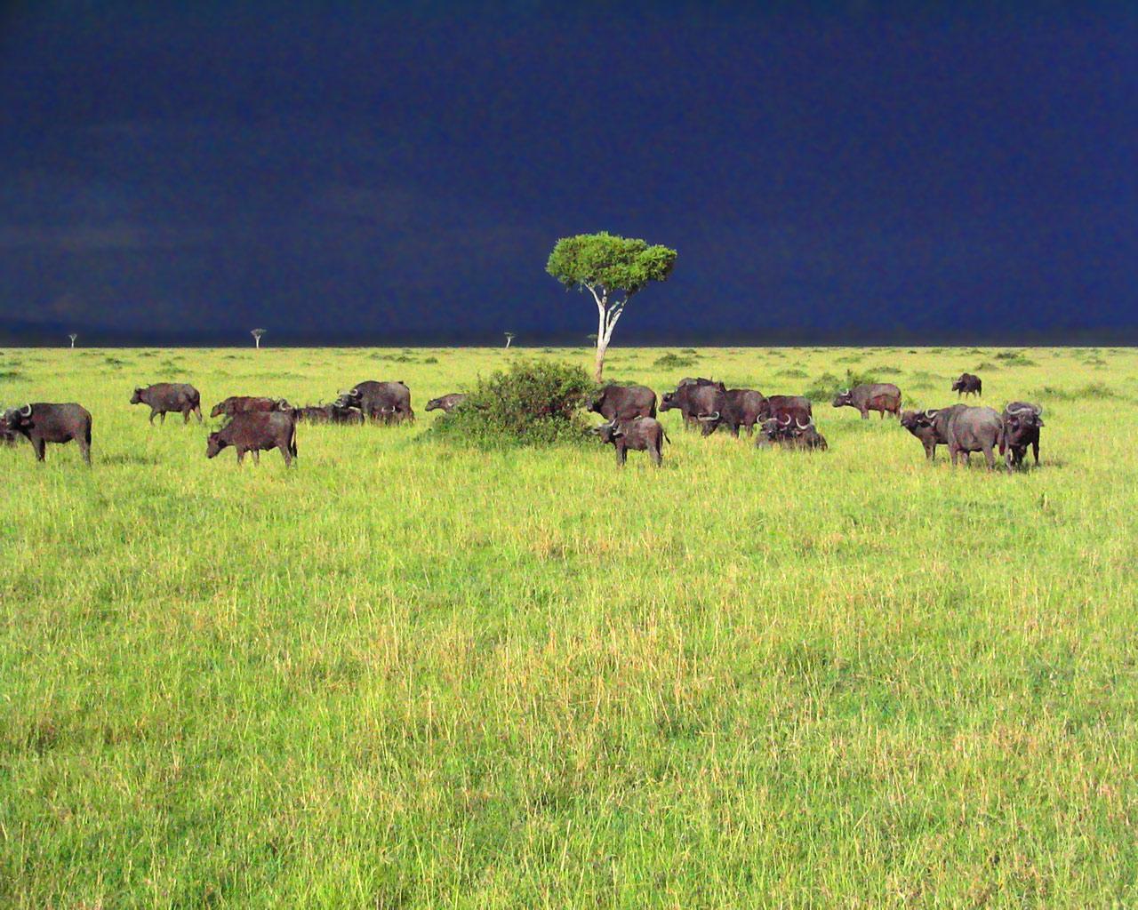 http://www.zastavki.com/pictures/1280x1024/2008/World_Africa_Savannah_Storm_007473_.jpg