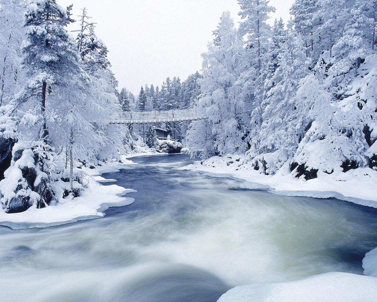http://www.zastavki.com/pictures/1280x1024/2010/Winter_wallpapers_Winter_Forest_019431_.jpg
