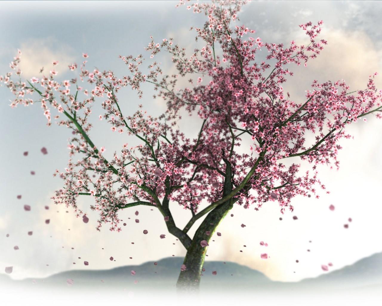 цветущая сакура сакура добавил silvery 2011 ...: zastavki.com/rus/nature/other/wallpaper-28425-10.htm