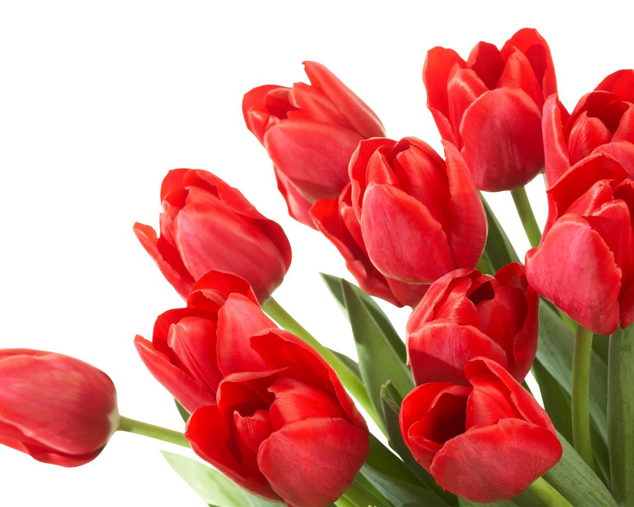 Гифки тюльпаны на прозрачном фоне, родственникам просто так