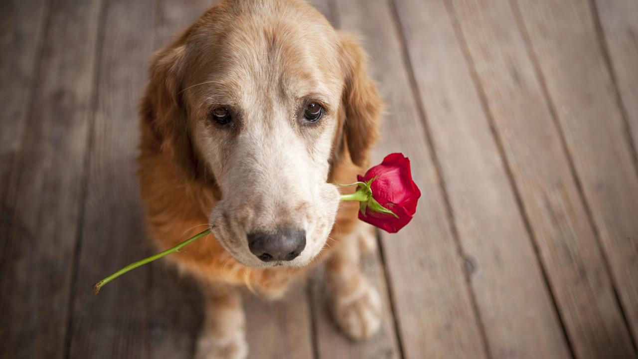 Dog flower quotes - managementdynamics info