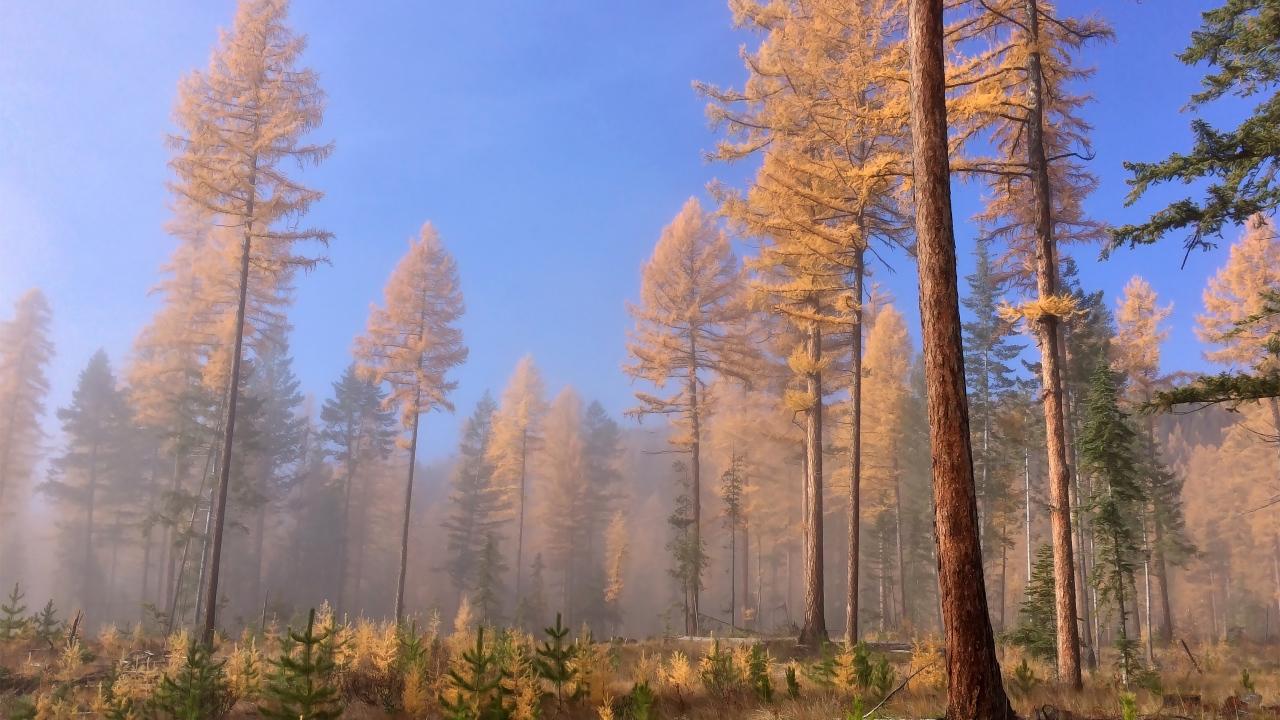 Prehistoric woods british columbia canada desktop for Columbia woods