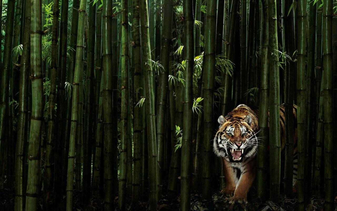 Bambu Mistis Bersuara Mirip Harimau !