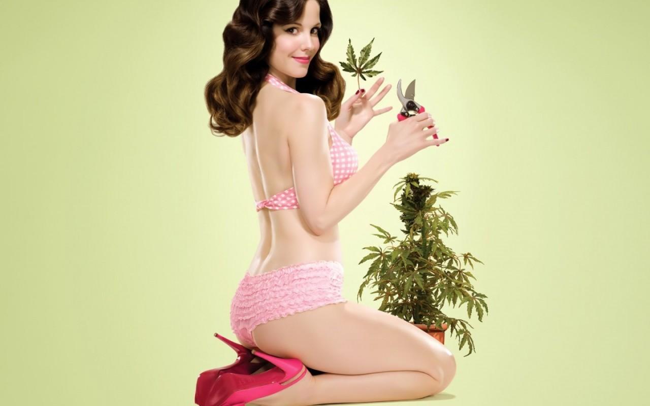 Previous, Creative Wallpaper - Ganja cannabis herb wallpaper