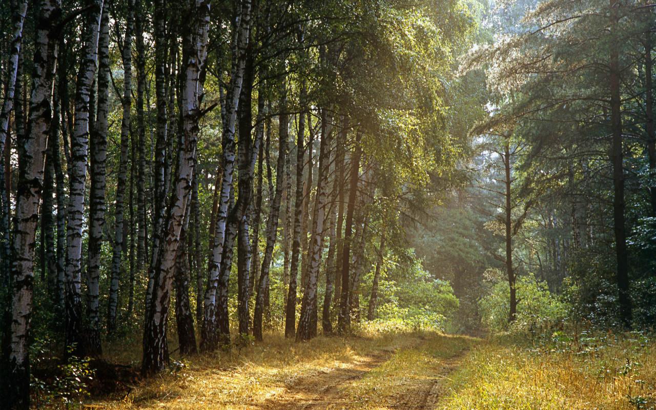 Обои природа лес русский лес