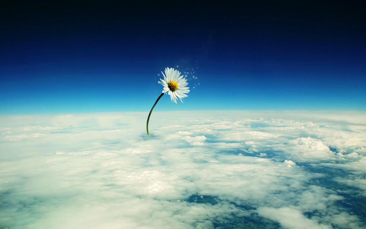 http://www.zastavki.com/pictures/1280x800/2009/Photoshop_Heavenly_flower_013850_.jpg