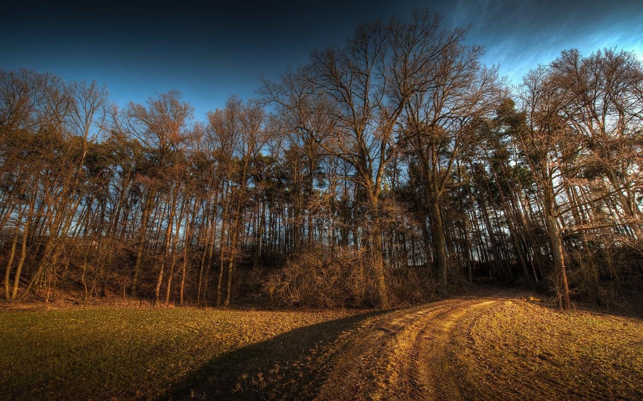 Обои природа лес дорога в лес
