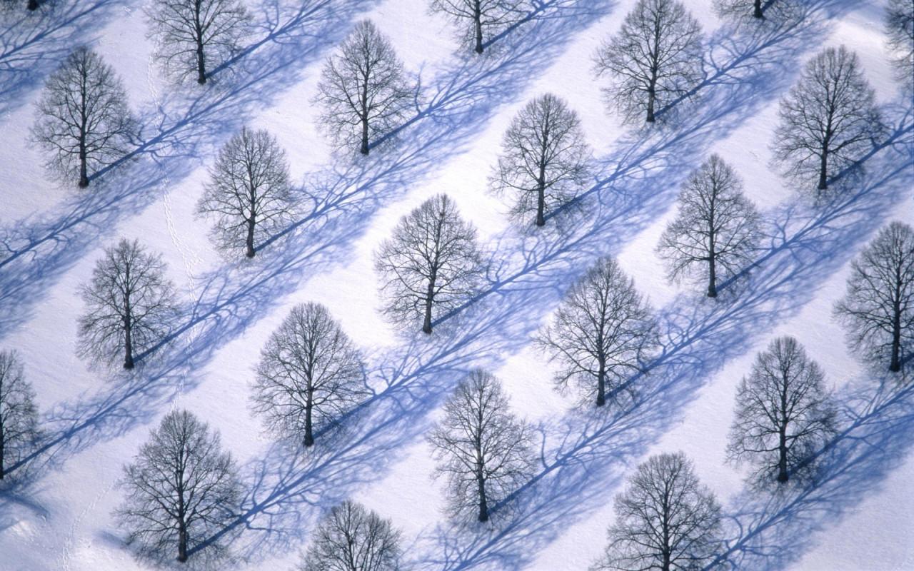 http://www.zastavki.com/pictures/1280x800/2010/Winter_wallpapers_Winter_trees_019335_.jpg