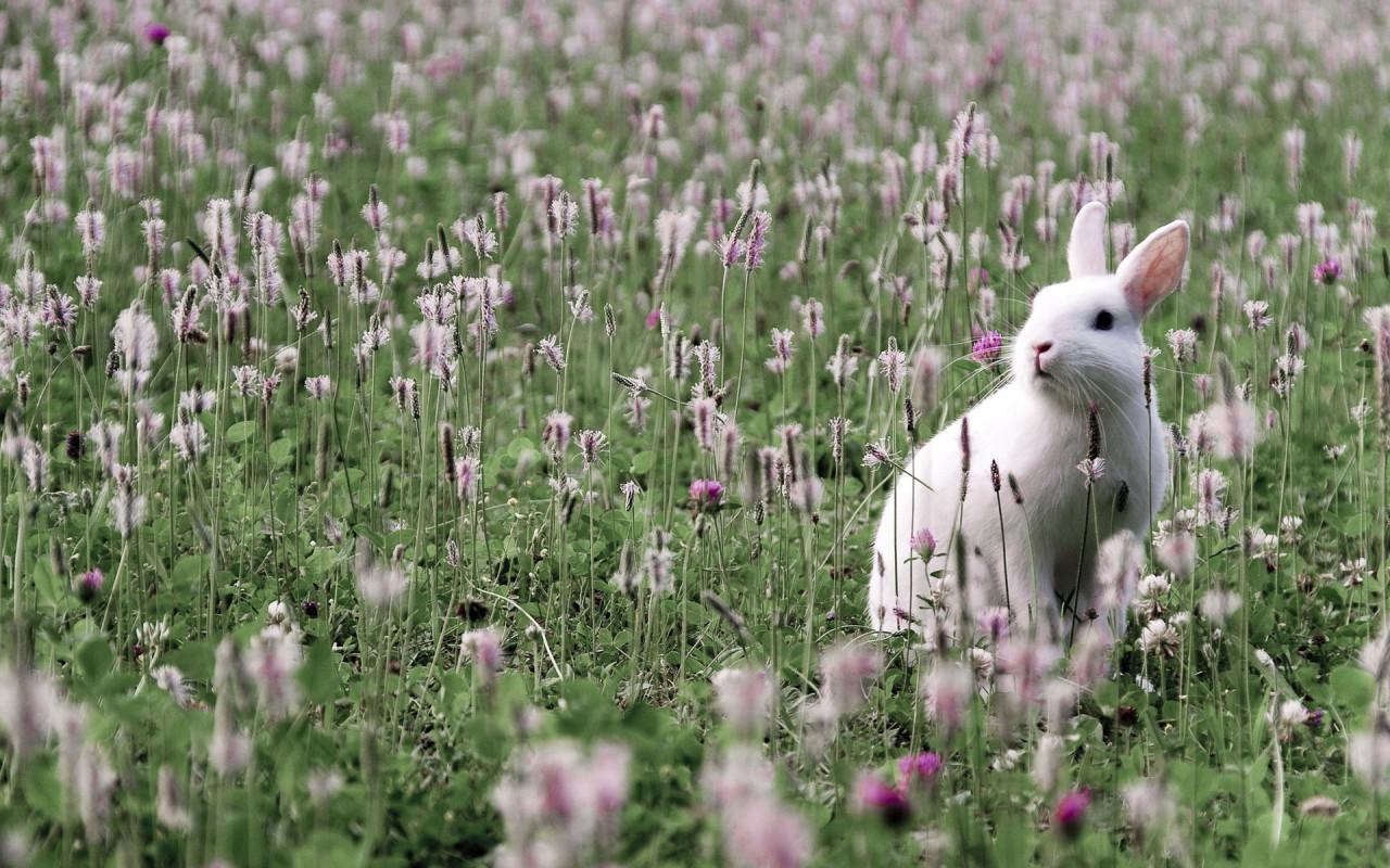 Заяц с цветами картинки 7