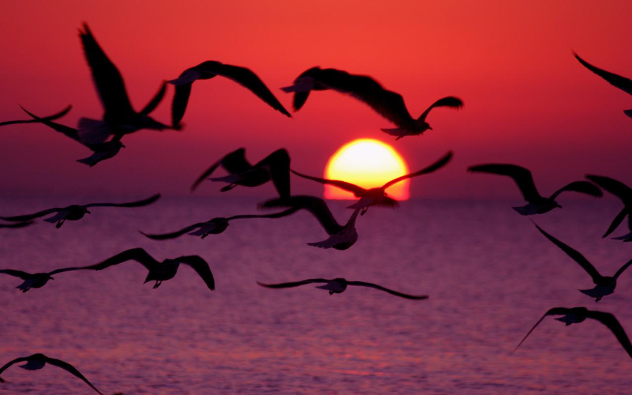 Животные птицы птицы пророчество