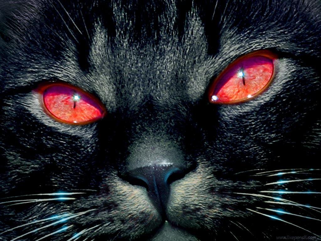 Глаза кота обои для рабочего стола картинки и фото