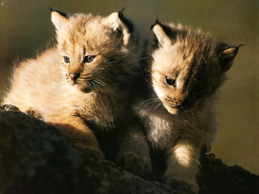 Скачать картинки котики бесплатно