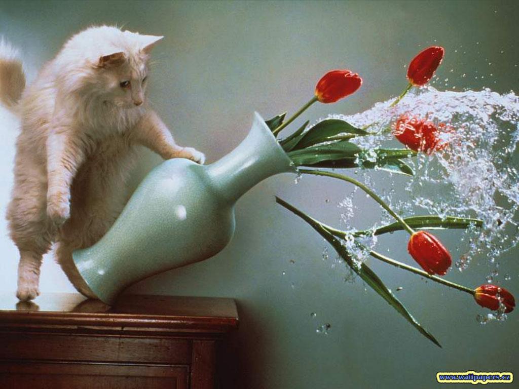 Animals_Cats__002031_1.jpg
