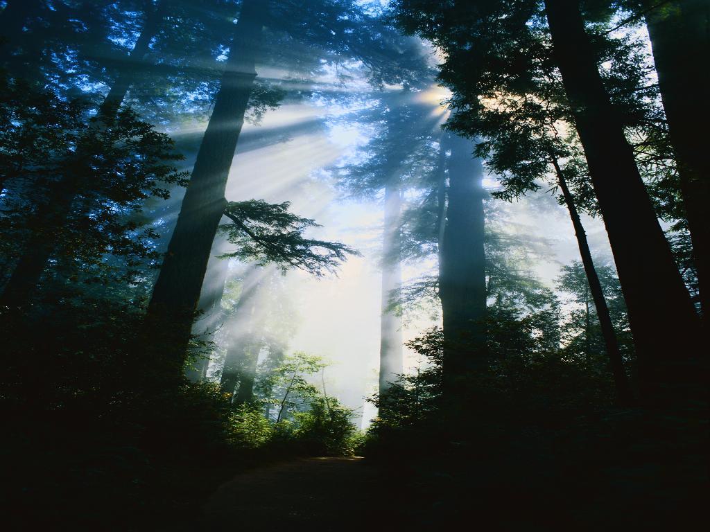 Лес посаженный