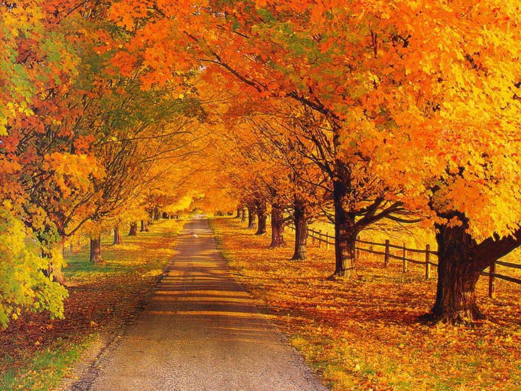 рисунки день осени фото категорически любят тень
