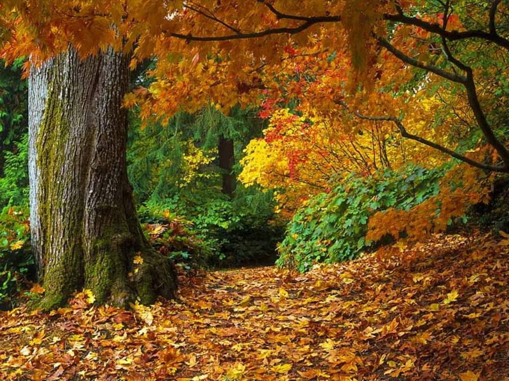 Картинки пиктурес осенний лес для рабочего стола