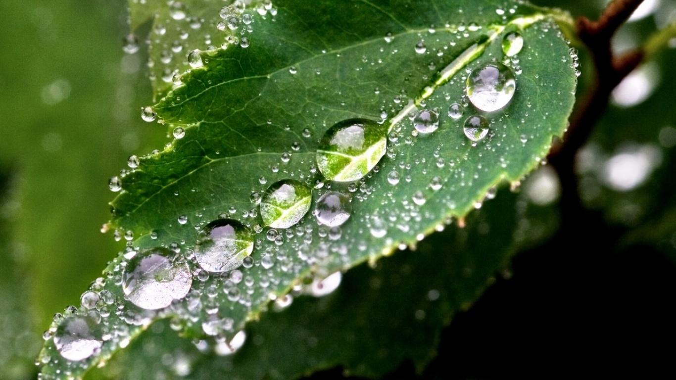animated rain wallpapers 1366x768 - photo #19