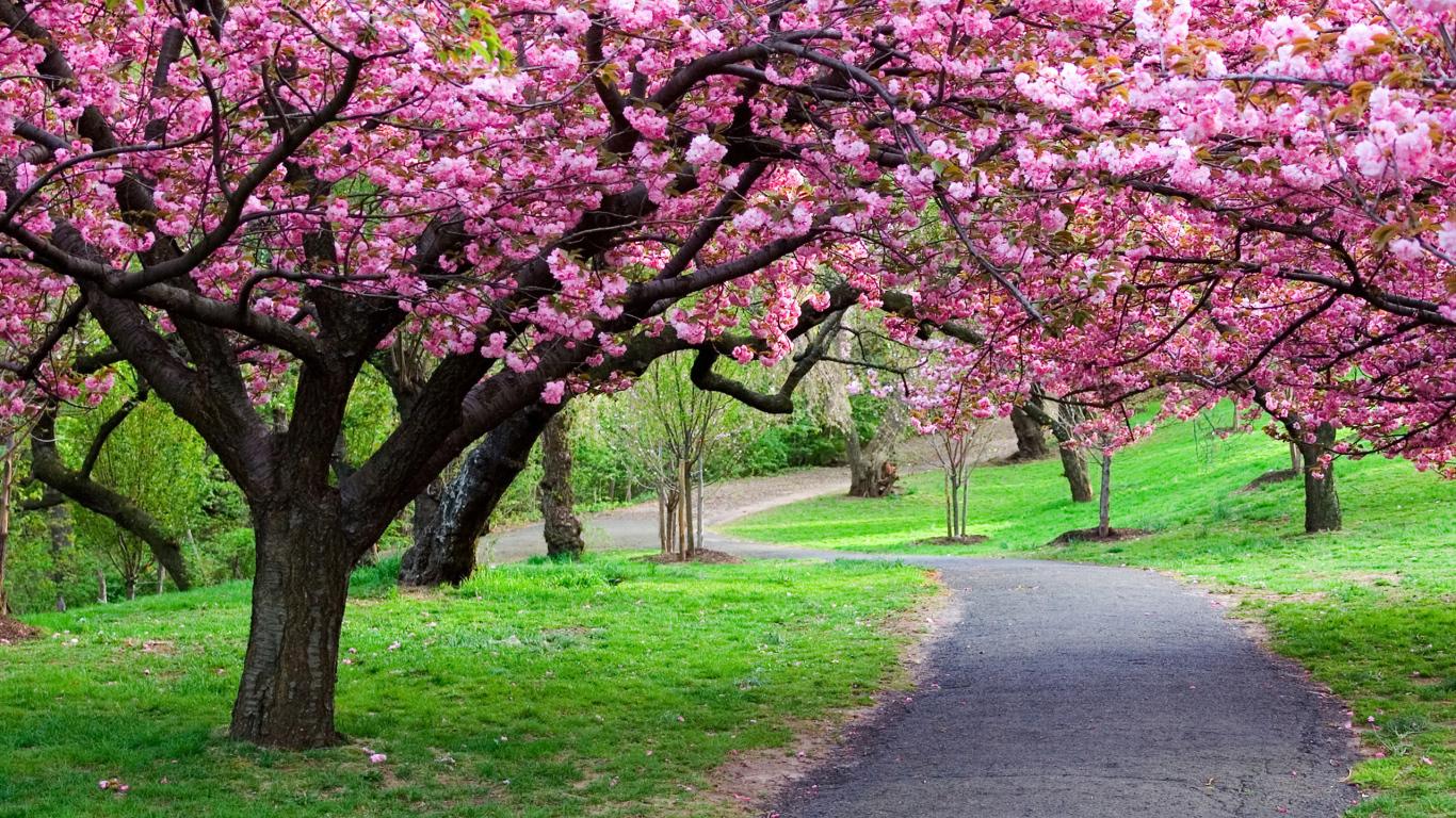 Весна цветущие деревья розовые цветы