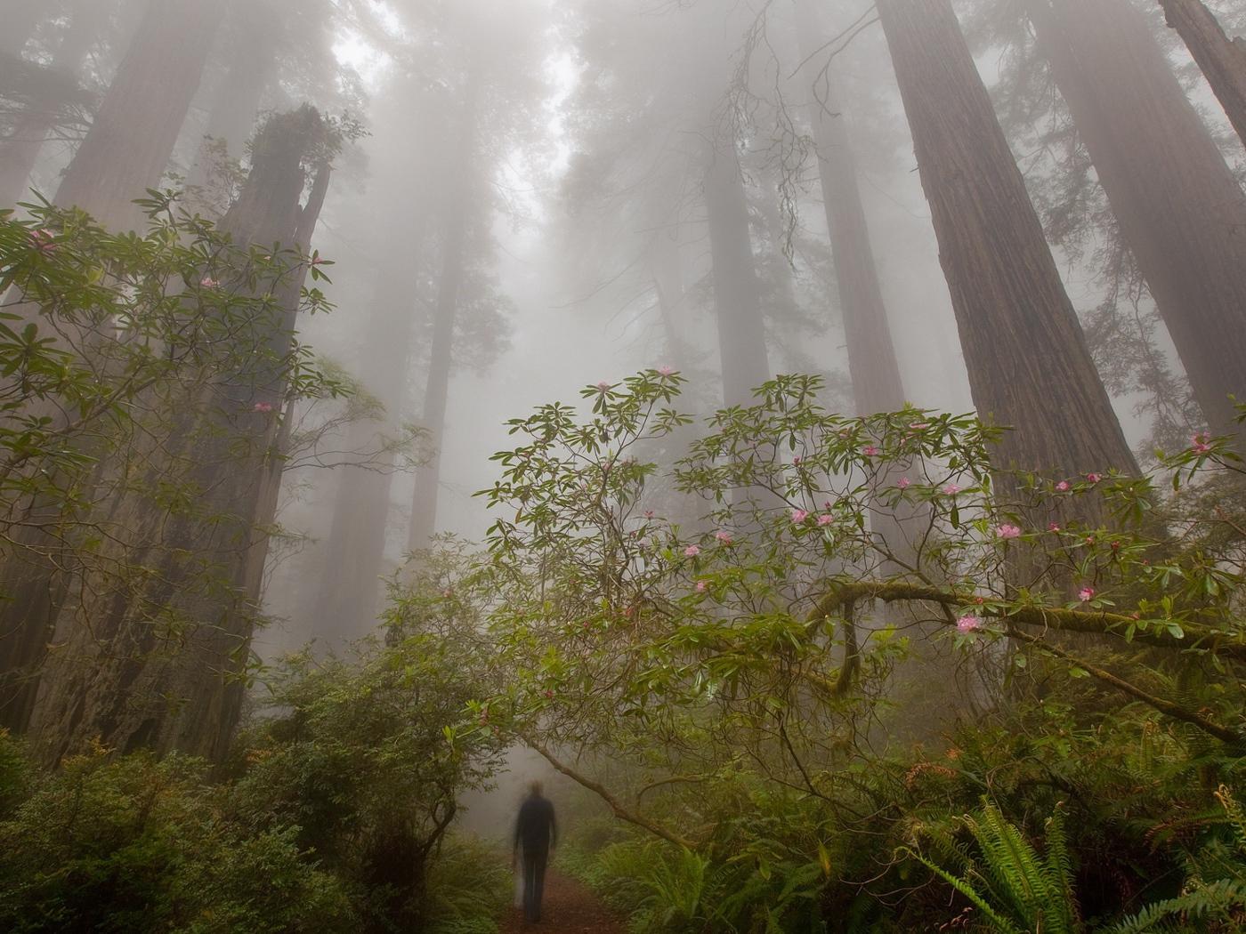Giant Trees Desktop Wallpapers 1400x1050