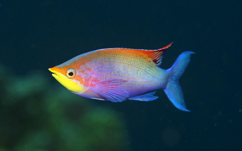 fish marlin desktop 1920x1200 - photo #34