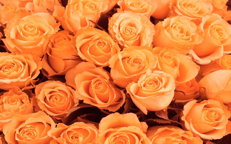 Красивые цветы к 8 марта обои для