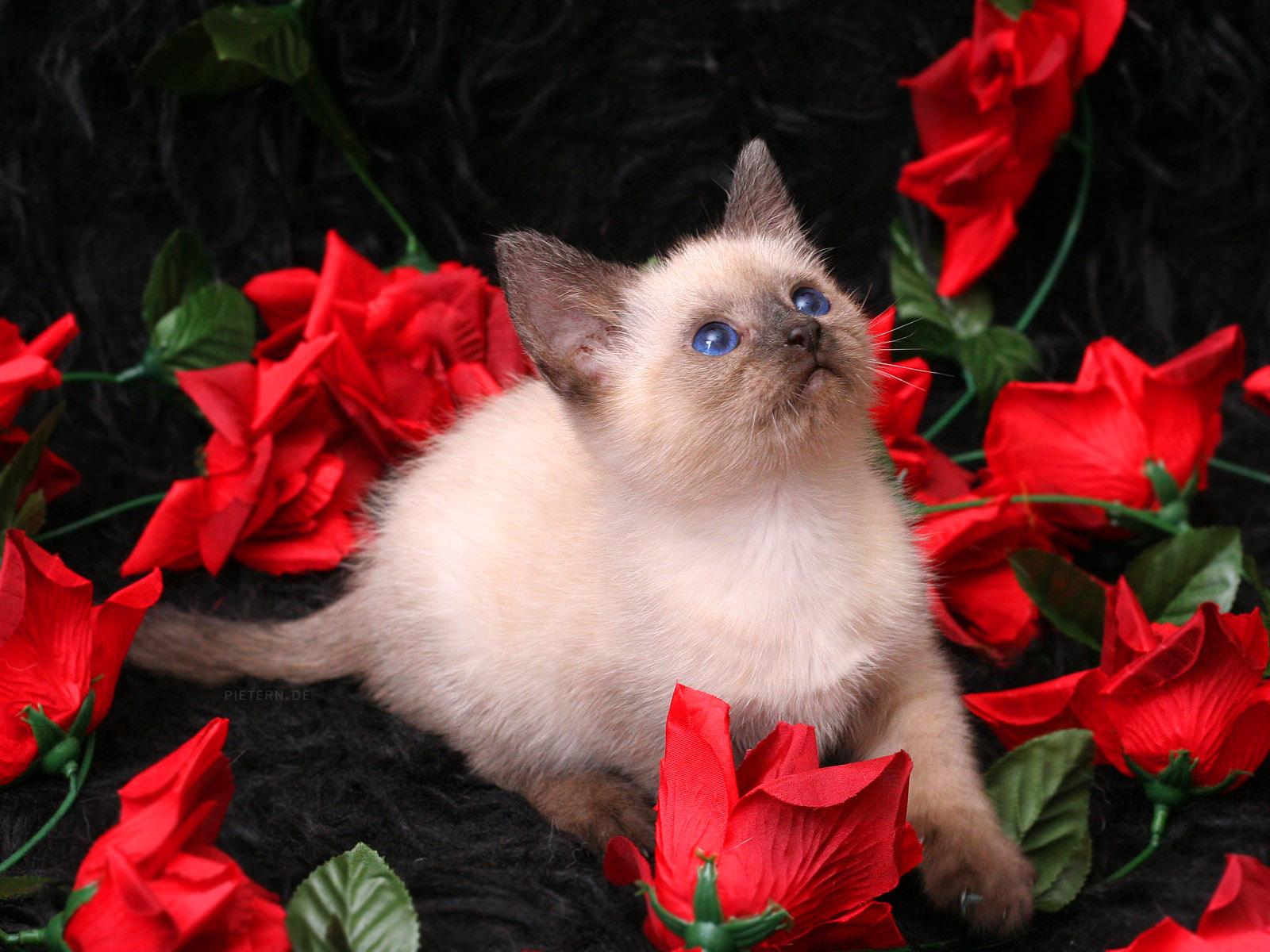 redroseshdwallpaperforwidedesktopbackground  red roses