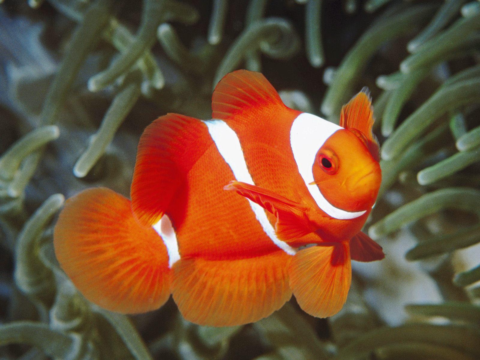 скачать фото рыбок бесплатно