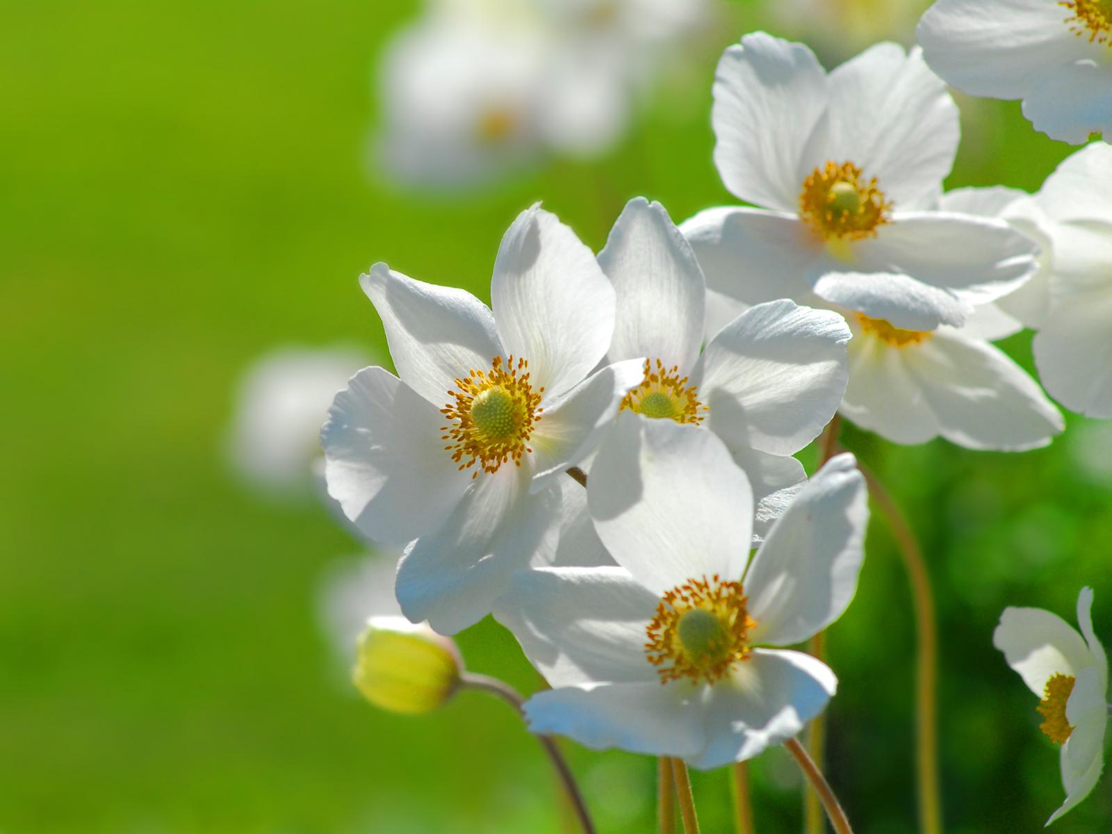 Картинки цветы с именами, анимационная открытка добрыми