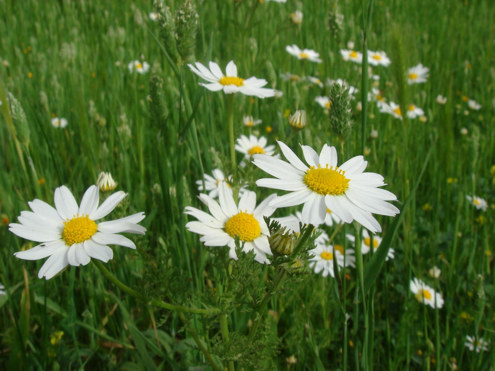 Обои весенние цветы