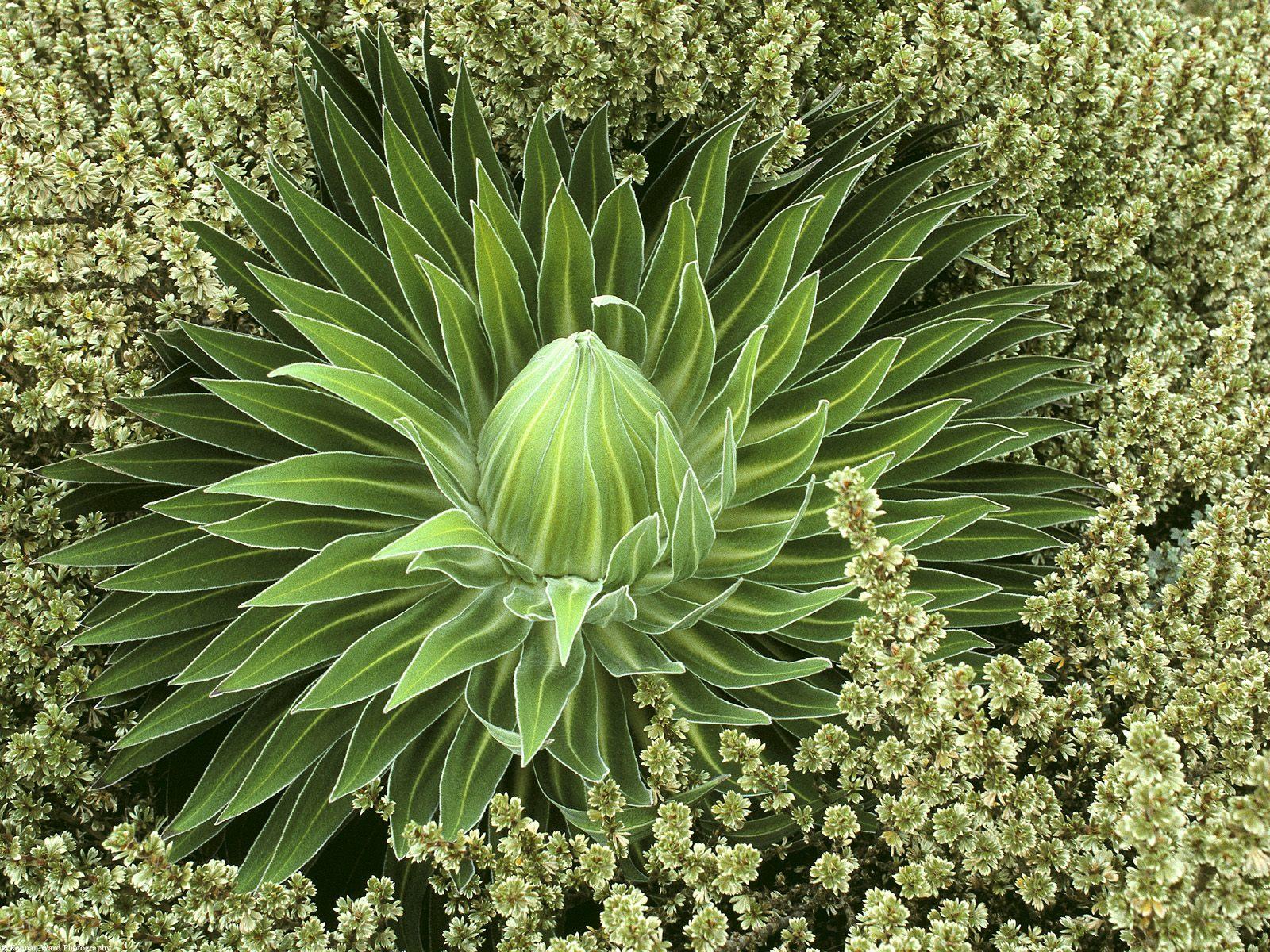 вспомнил картинки про растениями темные контрастные