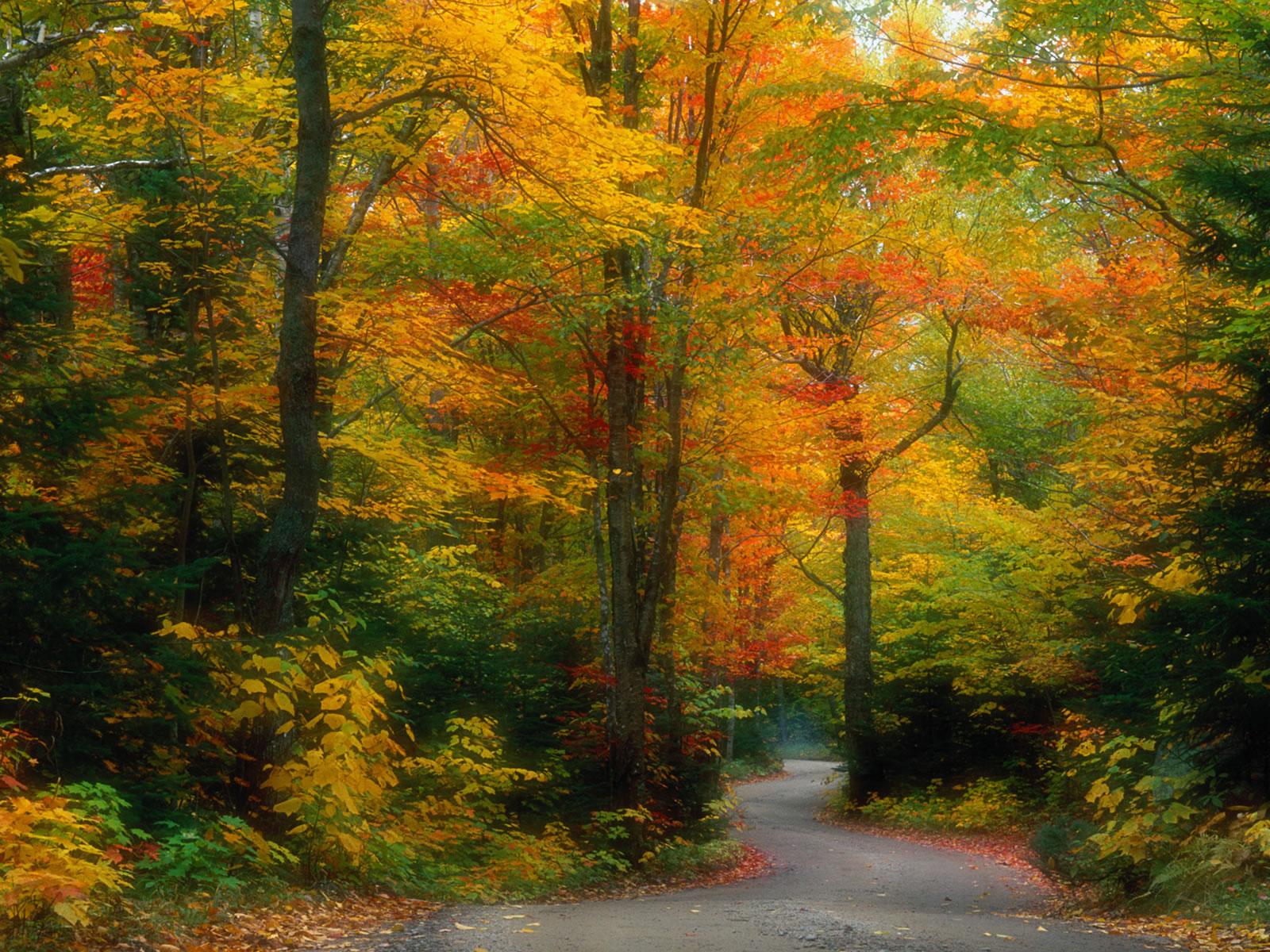 Картинка, Лес, скачать фото на рабочий стол и обои леса.