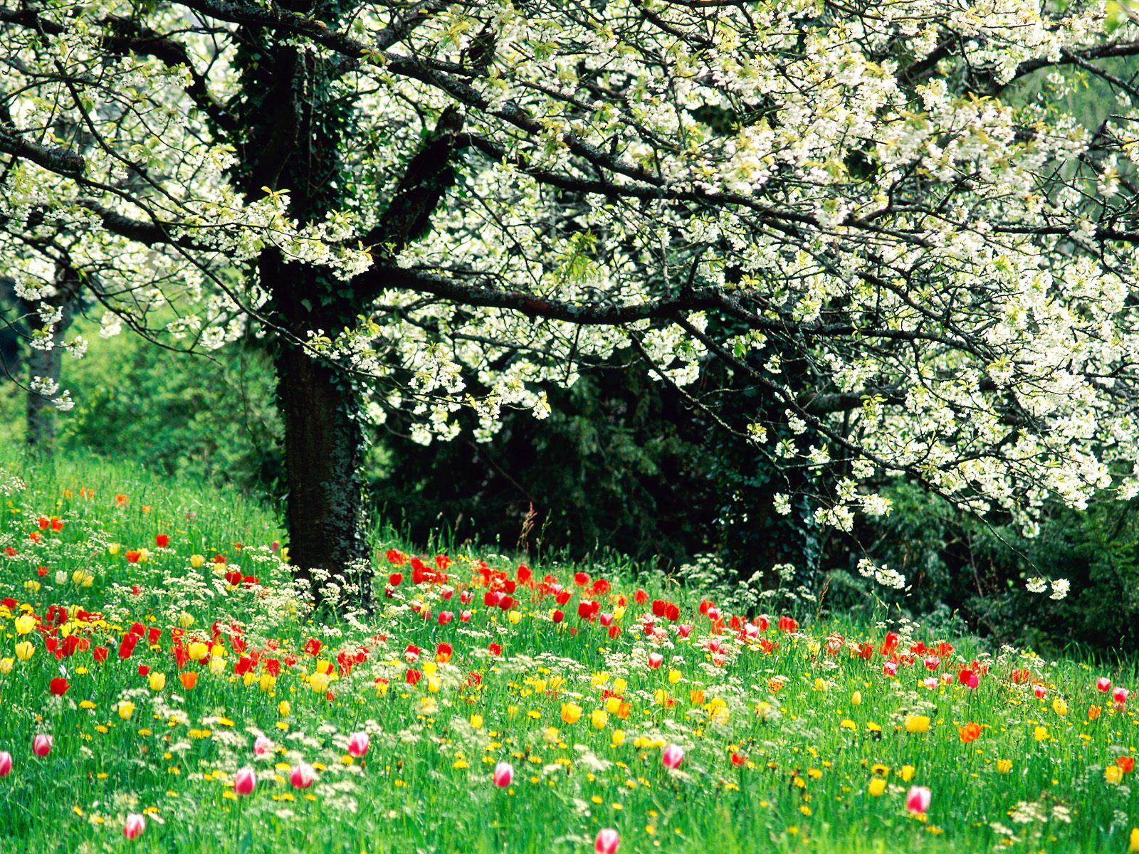 Обои краски весны