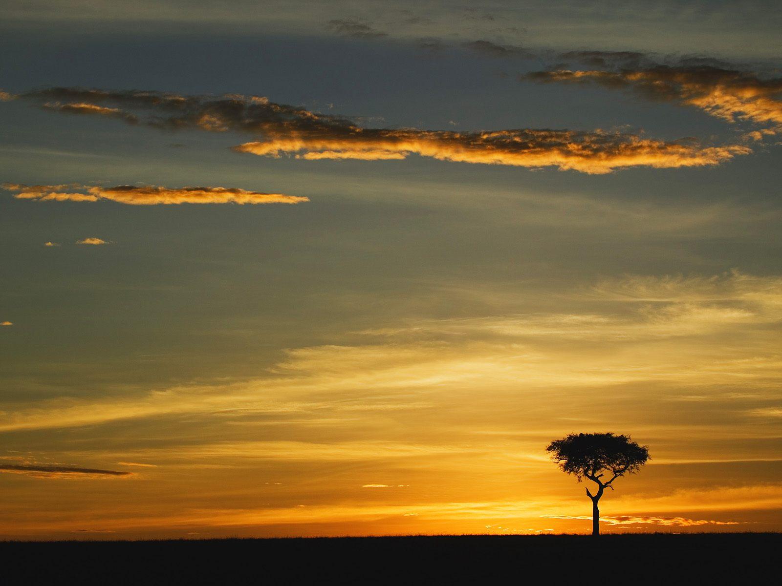 Single acacia tree at sunrise masai mara kenya for Single wallpaper