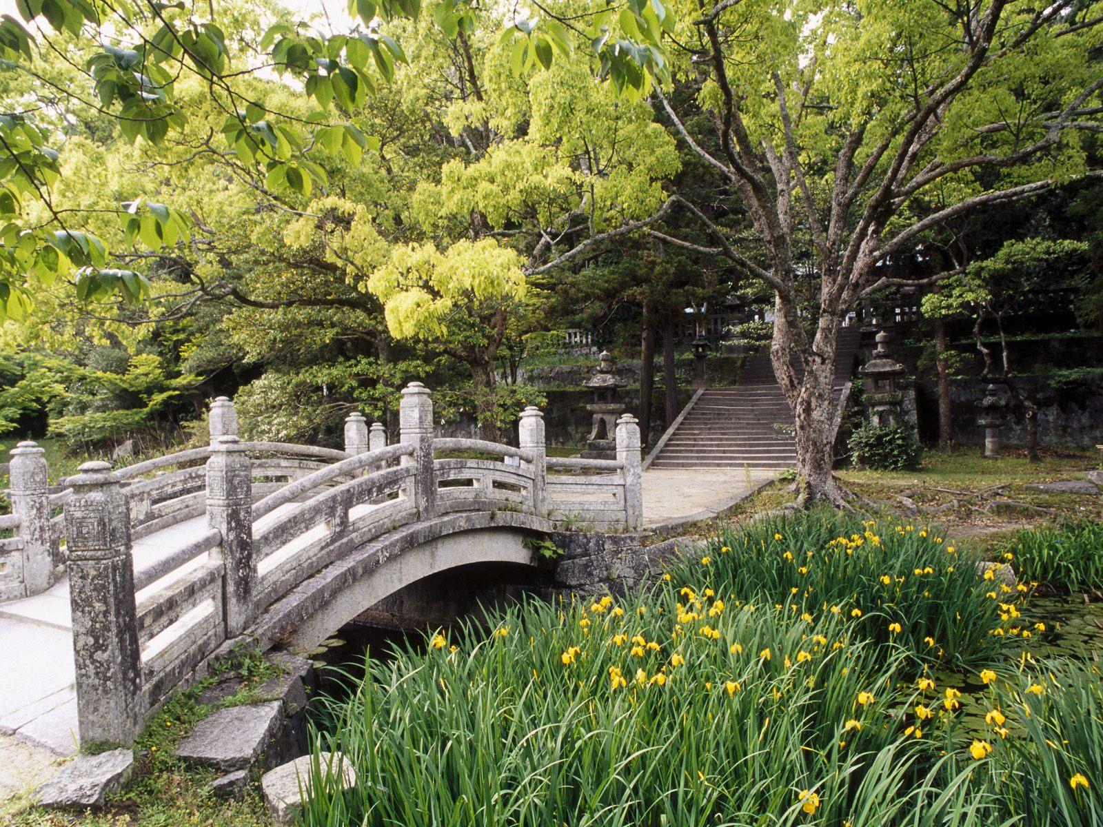 Декоративные растения для сада многолетние фото и