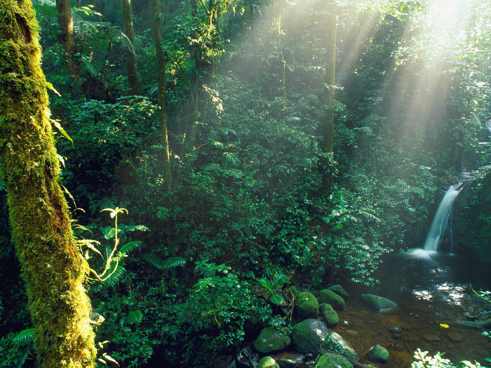 cloud rain forest