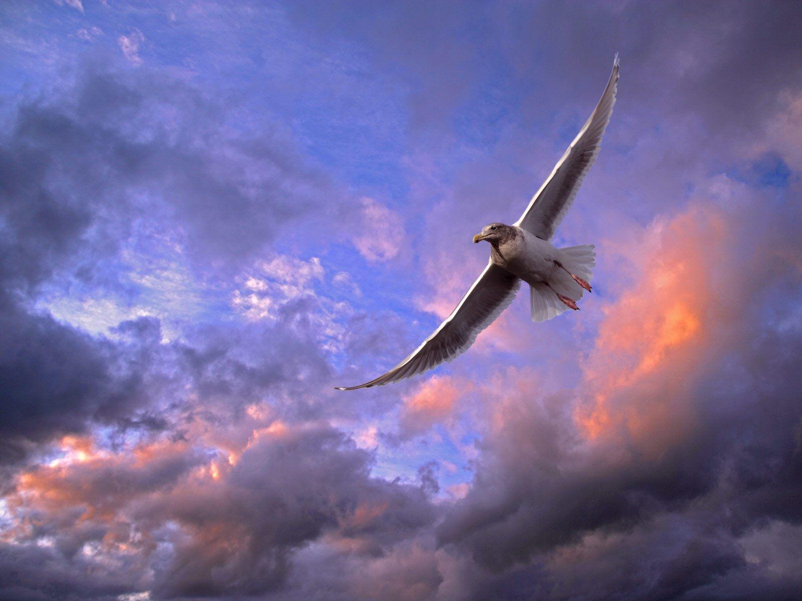 http://www.zastavki.com/pictures/1600x1200/2009/Animals_Birds_A_bird_in_the_sky_019244_.jpg