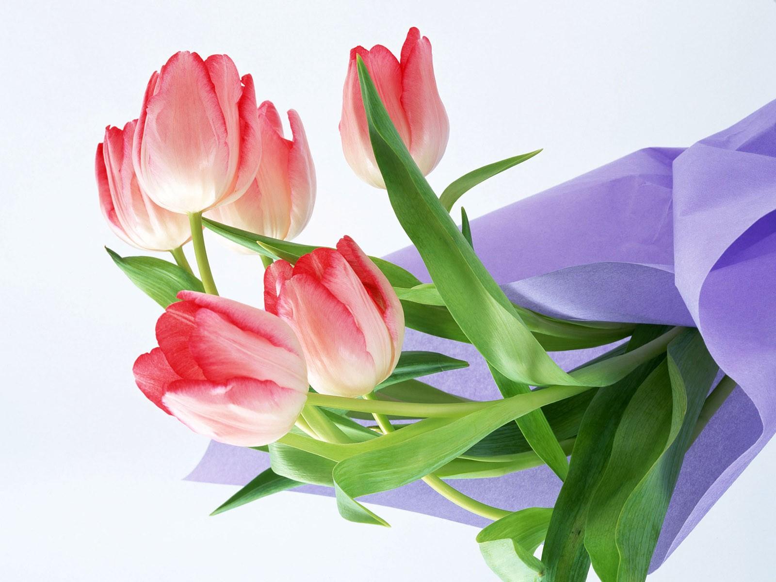 Обои цветы для любимой леди