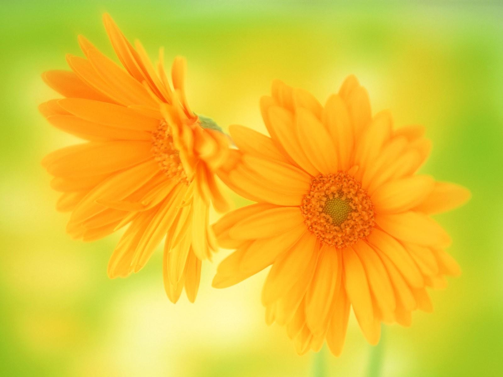 Желтые цветы открытка, про оленей смешные