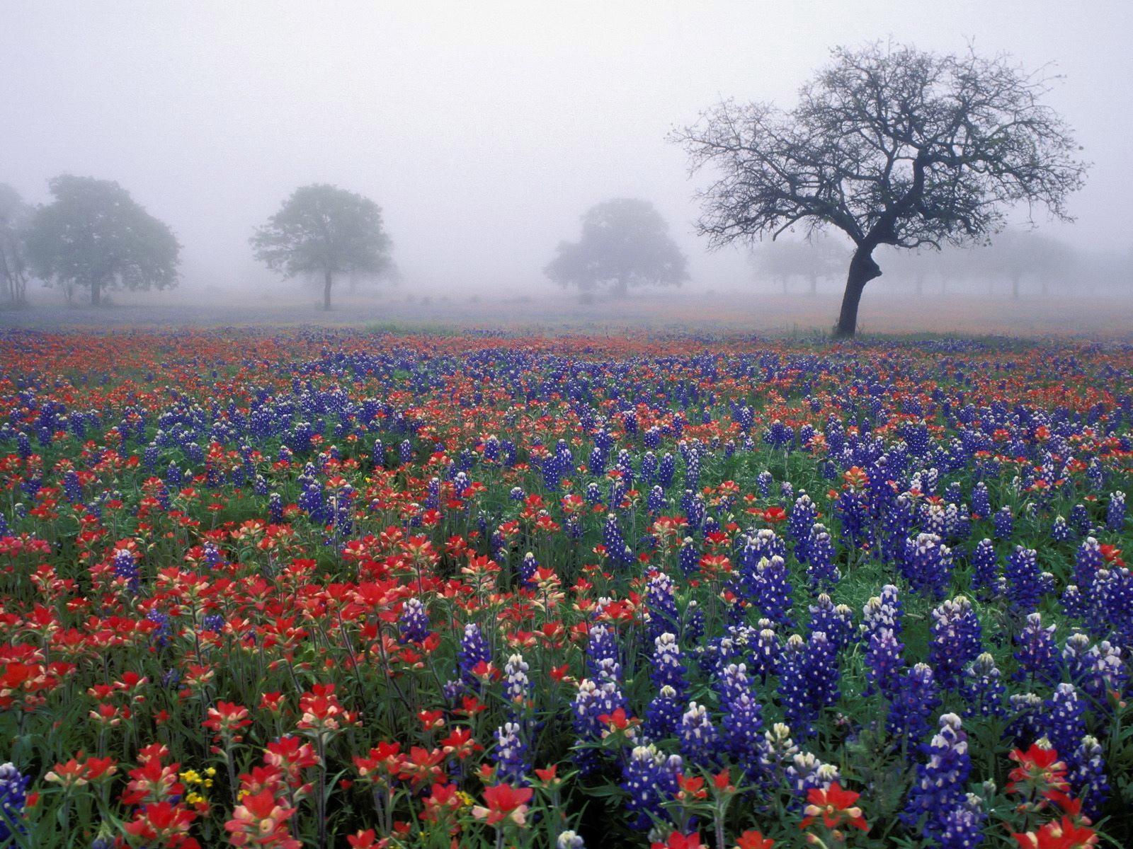 Обои полевые цветы в тумане