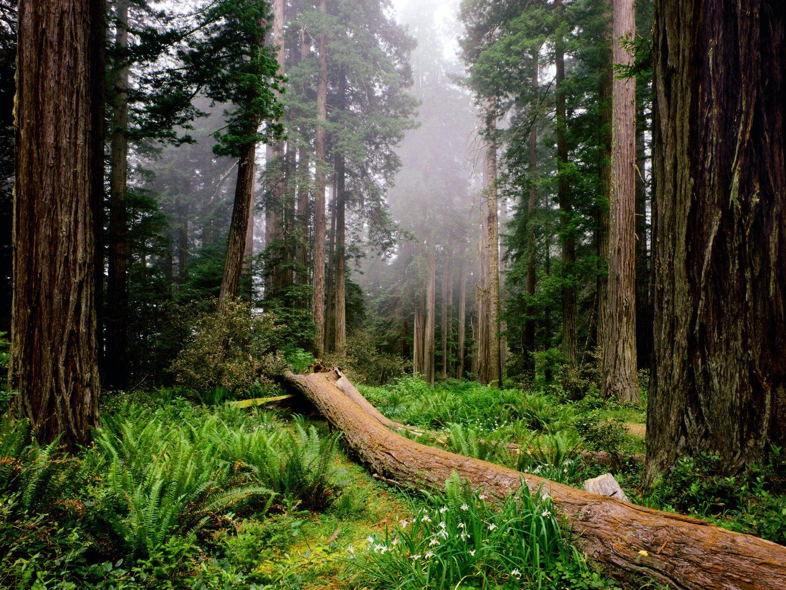 Обои утро в лесу