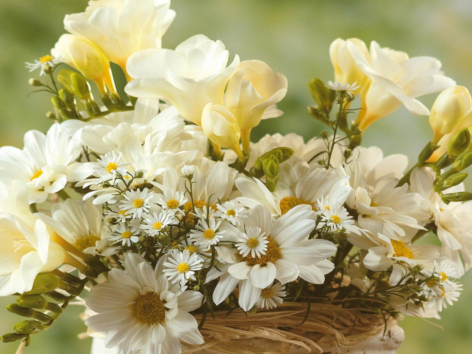 Фото с нежными цветами
