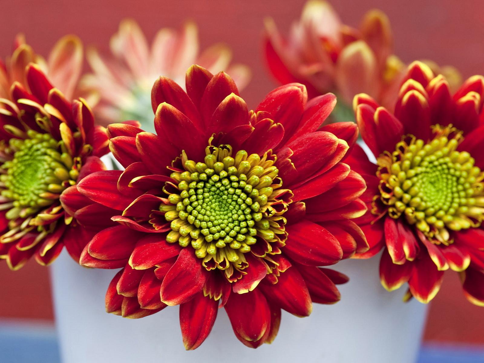 Summer Flower Summer Flower Bouquets