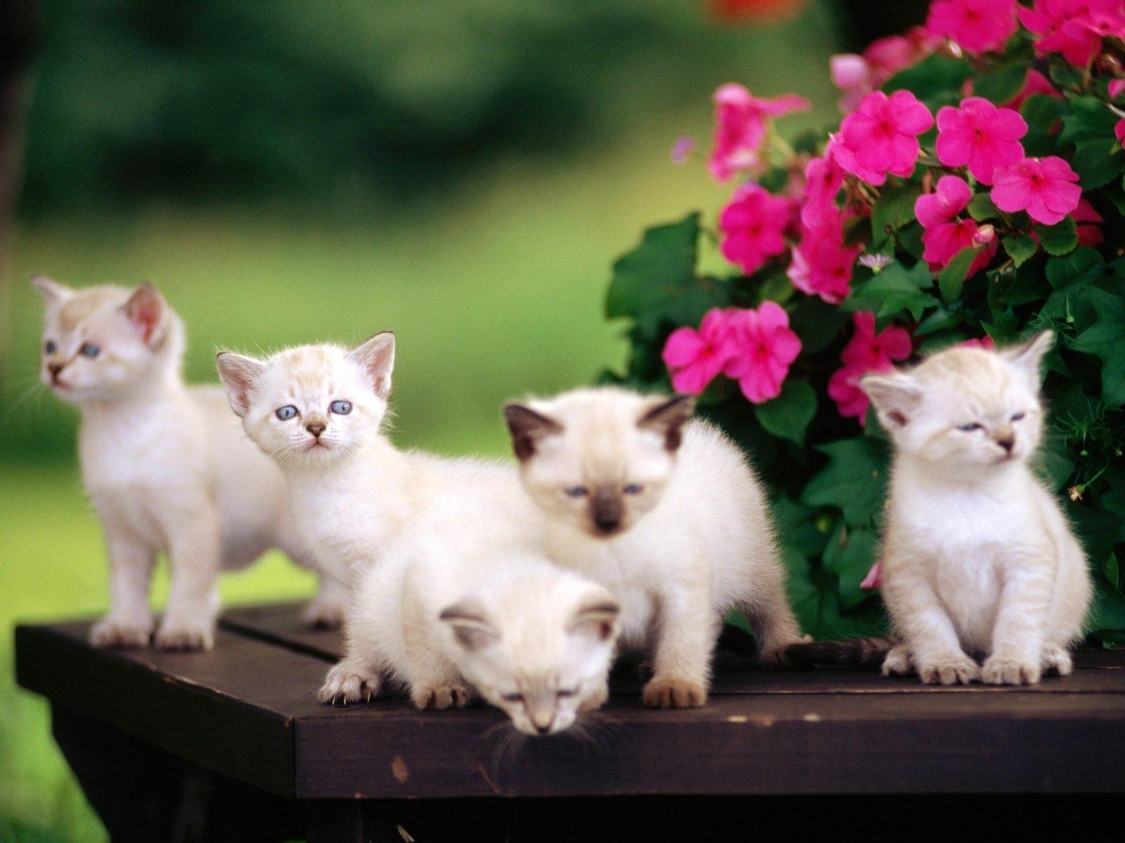 Кошки на рабочий стол фото 38.